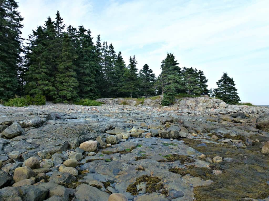 Seawall Campground - picnic area
