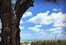 Anna Maria Island- Sentier vers la plage