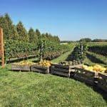 4 raisons de visiter le Centre d'interprétation de la courge et le vignoble Les Vents d'Ange cet automne