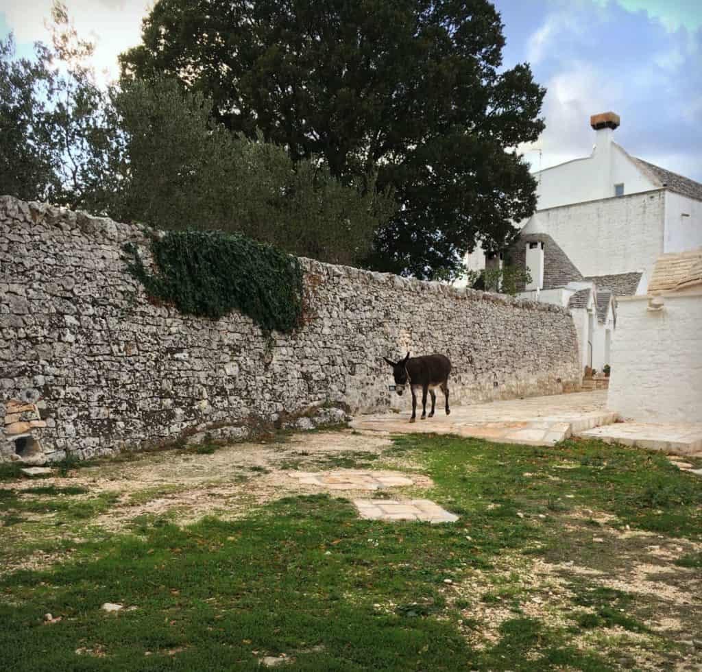 L'ane de l'Agriturismo Masserie Aprile - Locorotondo - les Pouilles - Italie | Guide de voyage : 5 jours dans les Pouilles, quoi voir et quoi faire