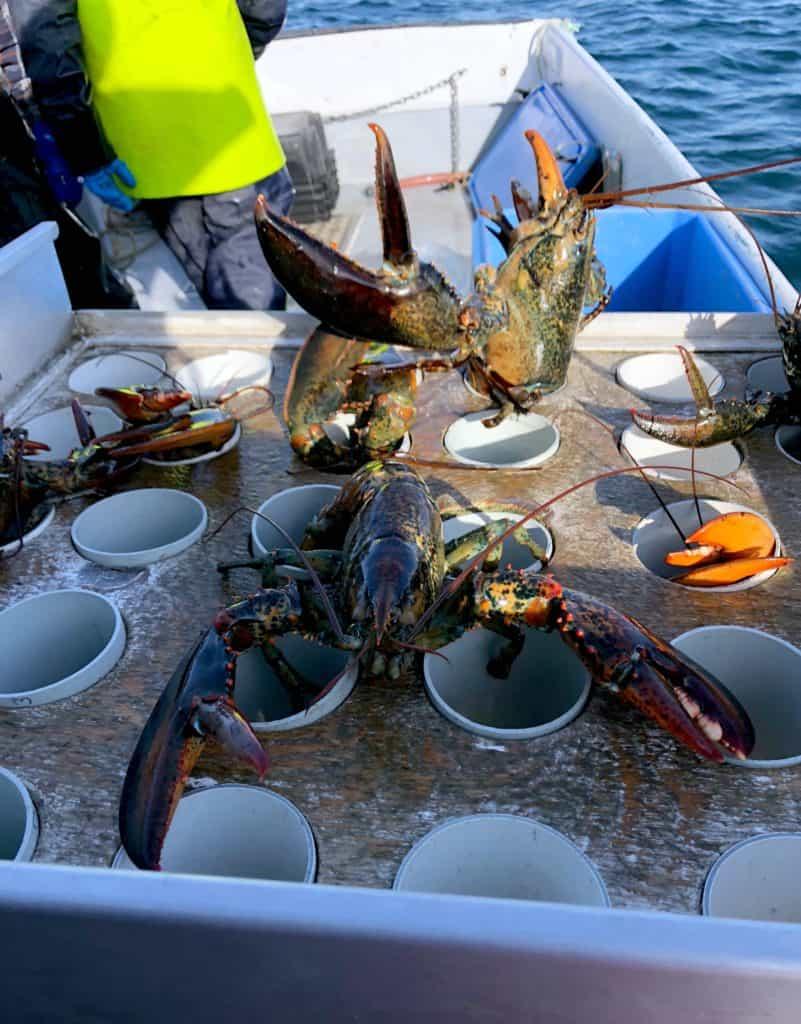 La pêche aux homards aux Îles de la Madeleine : de l'océan à notre assiette