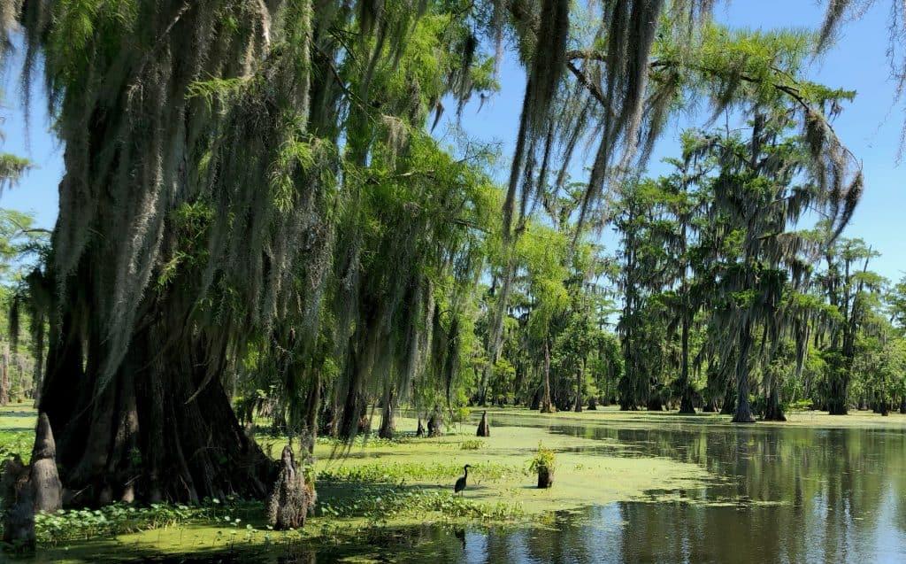 Bayou - Lac Martin - Louisiane