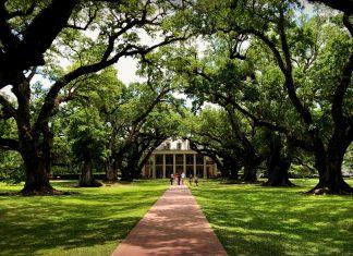 Allee de chênes centenaires - Oak Alley Plantation