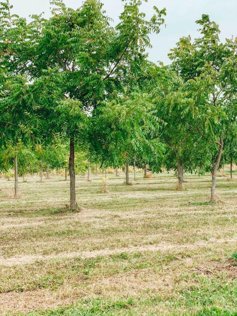 Les arbres de Au jardin des Noix
