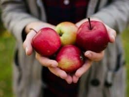 Recettes avec des pommes
