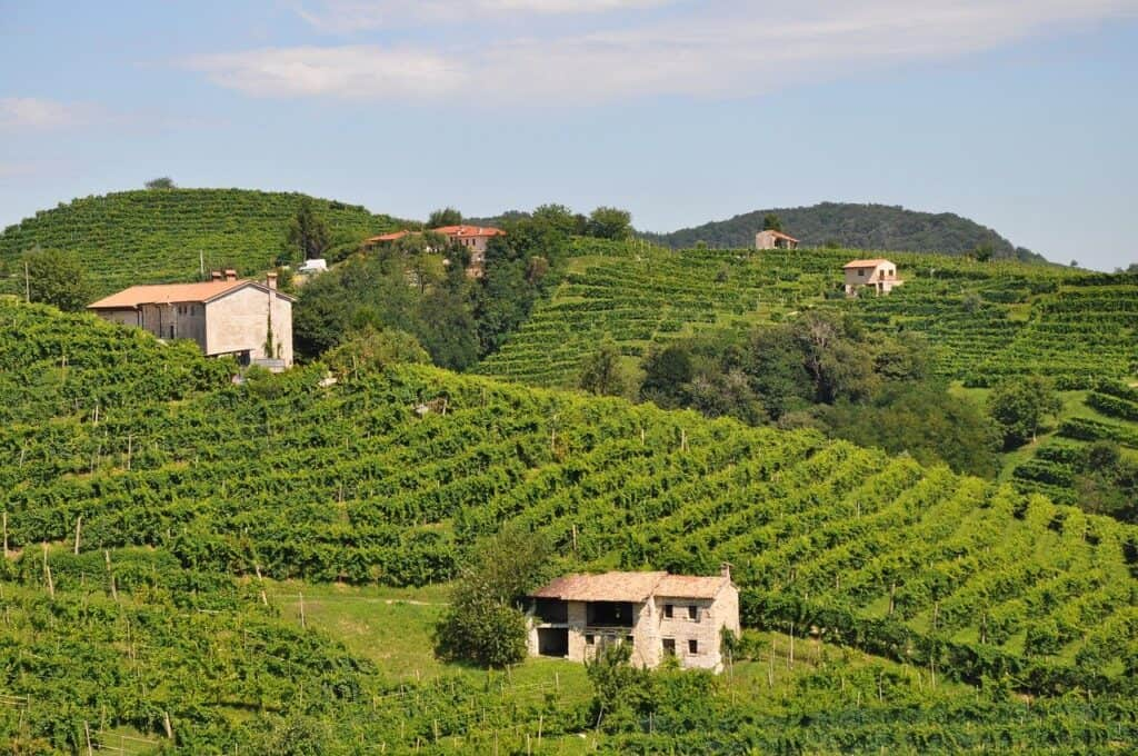Les vignes en Vénétie, où l'on produit le prosecco