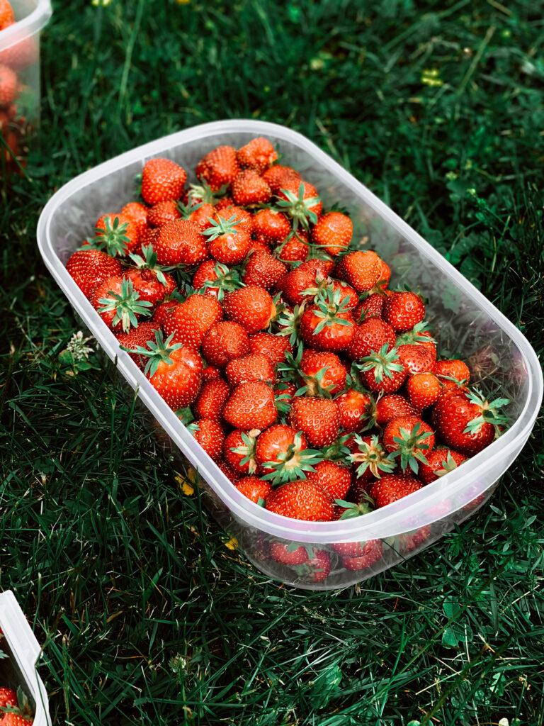 Plats de fraises